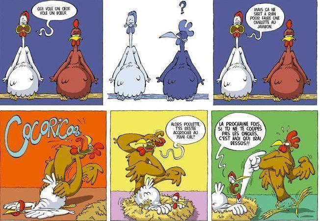 Poule - Photos poules rigolotes ...